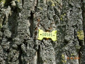 Baum Tag